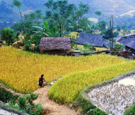 SAFFRON-TRAVEL-DESTINATION-VIETNAM-01